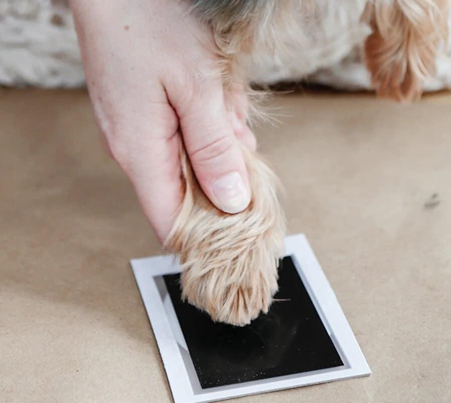 Dog's paw on ink pad
