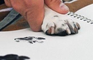 Printing a dog's paw