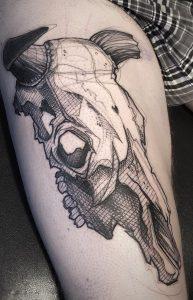 Cow Skull Sketch Tattoo